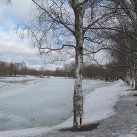 В ожидании весны... :: Наталья Герасимова