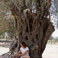 Около древней оливы :: Наталия Григорьева