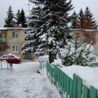в нашей деревне высокие сосны... :: Галина Флора