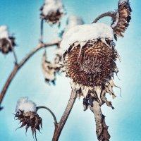 зима, холода :: Ustas FritZZZ