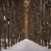 Зимняя аллея старого парка.                                                            Город Королёв :: Александр Попович