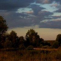 Летним вечером... :: Вера (makivera)