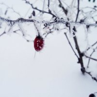ягодка под снегом :: Maryana Petrova