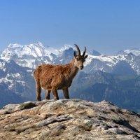 Ой, вы горы, вы синие горы... :: Elena Wymann