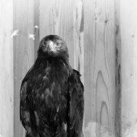 Птиц :: Роман Савоцкий