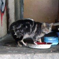 Бездомная красавица... или Не родись красивой...( :: Тамара Бедай