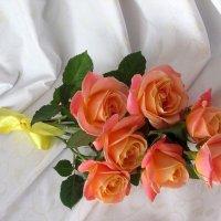 Розы в феврале :: Надежд@ Шавенкова