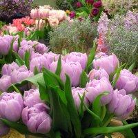 А в Ботаническом саду весна! :: Лия ☼