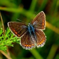 лето...бабочки...5 :: Александр Прокудин
