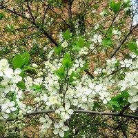 Здравствуй,Весна! :: Елена Семигина