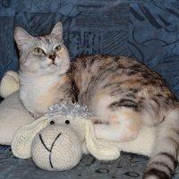 С Всемирным днём кошек и первым днём весны :: Сергей и Ирина Хомич