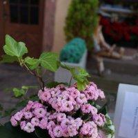 Первый вечер весны .... :: Алёна Савина