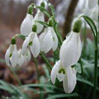 """""""Весной дождь пахнет надеждой..."""" :: Galina Dzubina"""