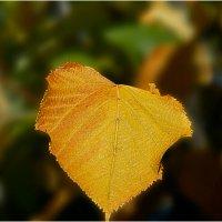 Осенний лист :: Владимир Кроливец