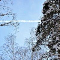 весеннее небо в зимнем лесу - 2 марта :: Галина Aleksandrova