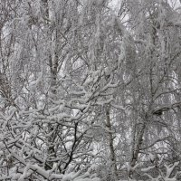 Зима сказала, что 2 марта это не весна :: Надежд@ Шавенкова