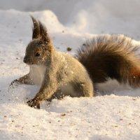 Ой, снег-снежок... :: Солоненко Лидия