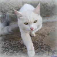 Почеши за ушком! :-) :: Андрей Заломленков