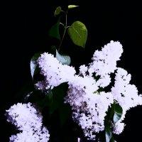 Музыка цветов 5 :: Елена Куприянова