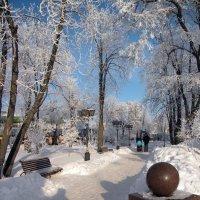 В зимнем парке :: Роман Савоцкий