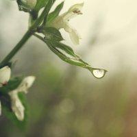 После дождя :: Артем Белев