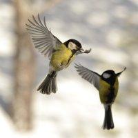 Весна- время летать :: Солоненко Лидия