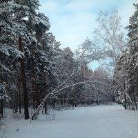 Прощай, зима! :: натальябонд бондаренко