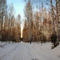Март в лесу :: Нэля Лысенко