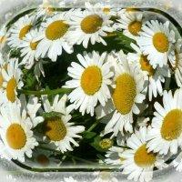 Цветов, любви и счастья Вам, милые женщины! :: Зоя Чария
