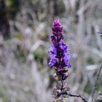 Цветок (перезалив2) :: Лилия Кондратьева
