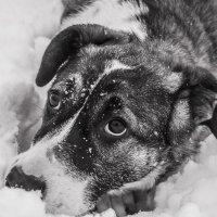 Единственное место в мире, где можно встретить подлинного человека, — это взгляд собаки. :: владислав завадич