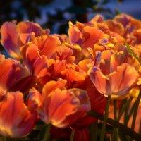 С праздником весны, очарования, красоты и женственности! :: Ольга Русанова (olg-rusanowa2010)