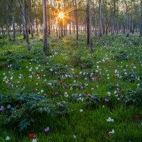 зимний лес :: Валерий Цингауз