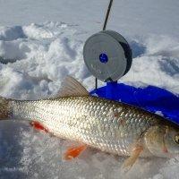 Ловись рыбка большая и.... :: Алексей Сметкин