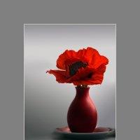 Аленький цветочек :: Olenka