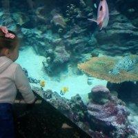 У аквариума... :: Serg