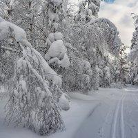 Заснеженный лес :: Vladimbormotov