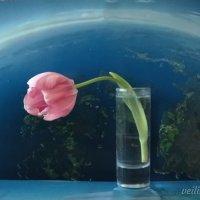 Земля в иллюминаторе... :: veilins veilins