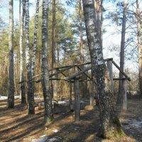 Тени в лесу :: Виктор  /  Victor Соболенко  /  Sobolenko