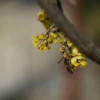 Из Плевен ! Весна ! :: Вен Гъновски