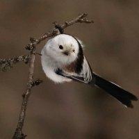 Птаха :: Светлана