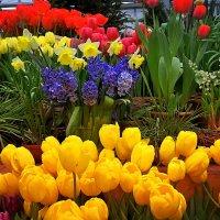 Весна идёт и мир становится ярче! :: Татьяна Помогалова