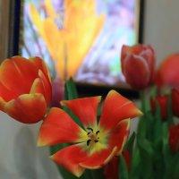 Тюльпан и не только... :: просто Борисыч