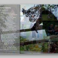 когда поэзия и фотография встречаются ... :: Heinz Thorns