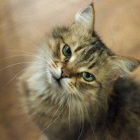Кошка смотрит на D300 :: Вадим Савенко