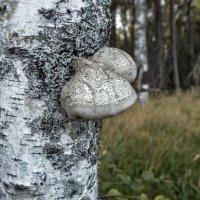 В лесу :: Алена Малыгина