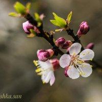 Весна.... :: Ирина Комолова