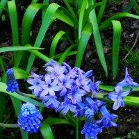 Слёт синих и прекрасных :: Daria Vorons