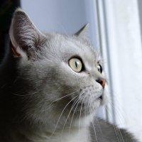 Мартовский  кот :: Вик Токарев