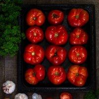 Урожай помидор :: Наталья Филипсен